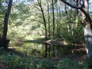 Kleingewässer in W-Nord - noch sind sie Lebensraum und bald sollen sie weg oder Zierteich sein ;-(