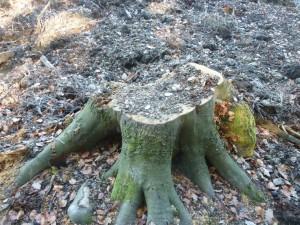 Dies war ein guter Nachbar - er war Heimat und spendete Frischuft - RIP alter Baum...